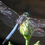 Libelle als Hoffnung für Kinder